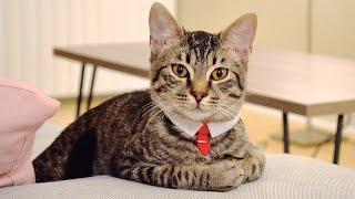 DIY No Sew Cat Collar- Pet Necktie!