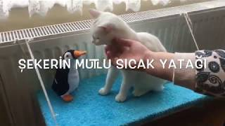 kediler için kalorifer yatağı yapımı (çok kolay)
