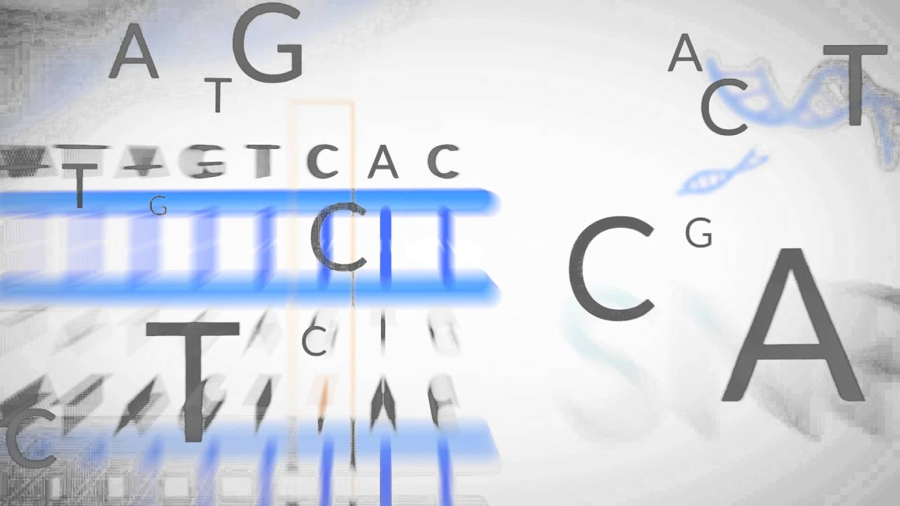 Non-Invasive Prenatal Testing - Embryology