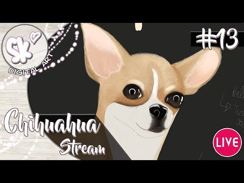 Simply Kaddi - Digital Art: Ein Fell für den Chihuahua #13 Livestream
