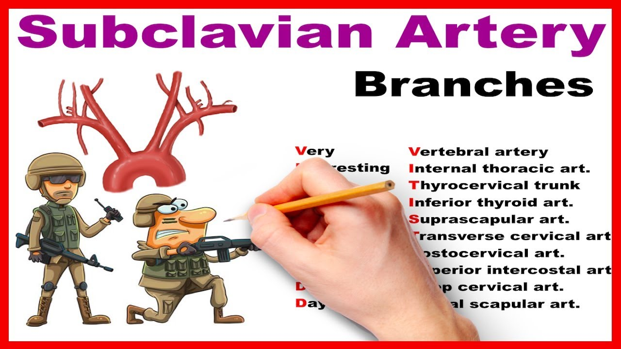 Subclavian Artery Branches Mnemonic Series 14 Youtube