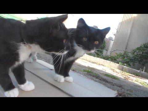 Коты и зеркало. Прикол