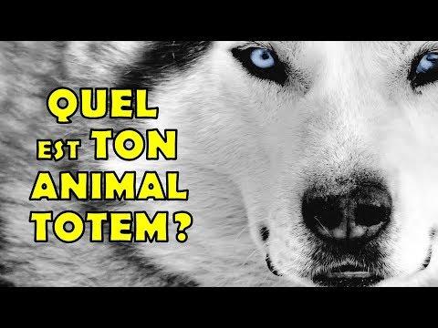 QUEL EST TON ANIMAL TOTEM?