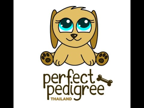 Perfect Pedigree Thailand&39;s Purebred Pom Puppies for sale
