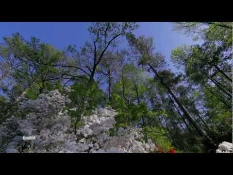 David Garrett - Eliza's Song