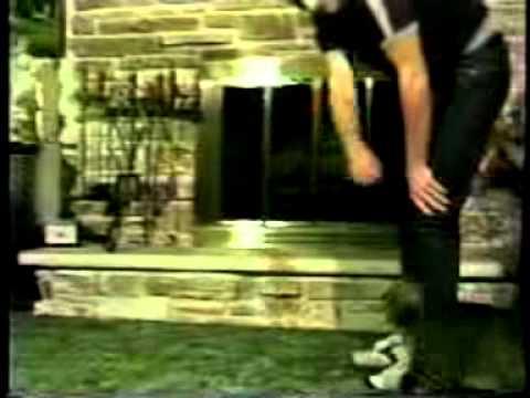 Cat Dancer in Action
