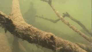 Underwater world of Discus