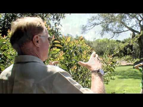ICCA - Avocado Farming in California