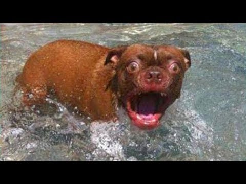 TRY NOT TO LAUGH or GRIN 🐶 Funny Dogs Water Fails Compilation 2019 💦 Life Awesome
