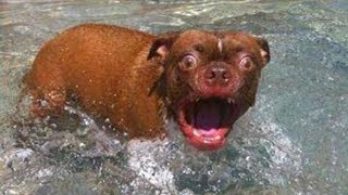 TRY NOT TO LAUGH or GRIN  Funny Dogs Water Fails Compilation 2019  Life Awesome
