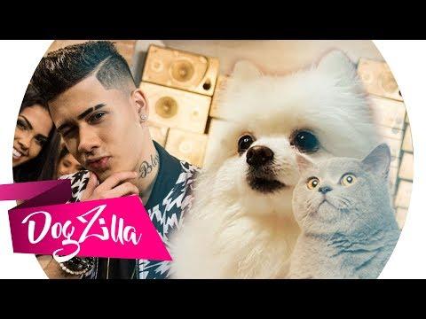 TÔ APAIXONADO NESSA MINA EM CACHORRÊS - MC Kevinho ft Gato DogZilla