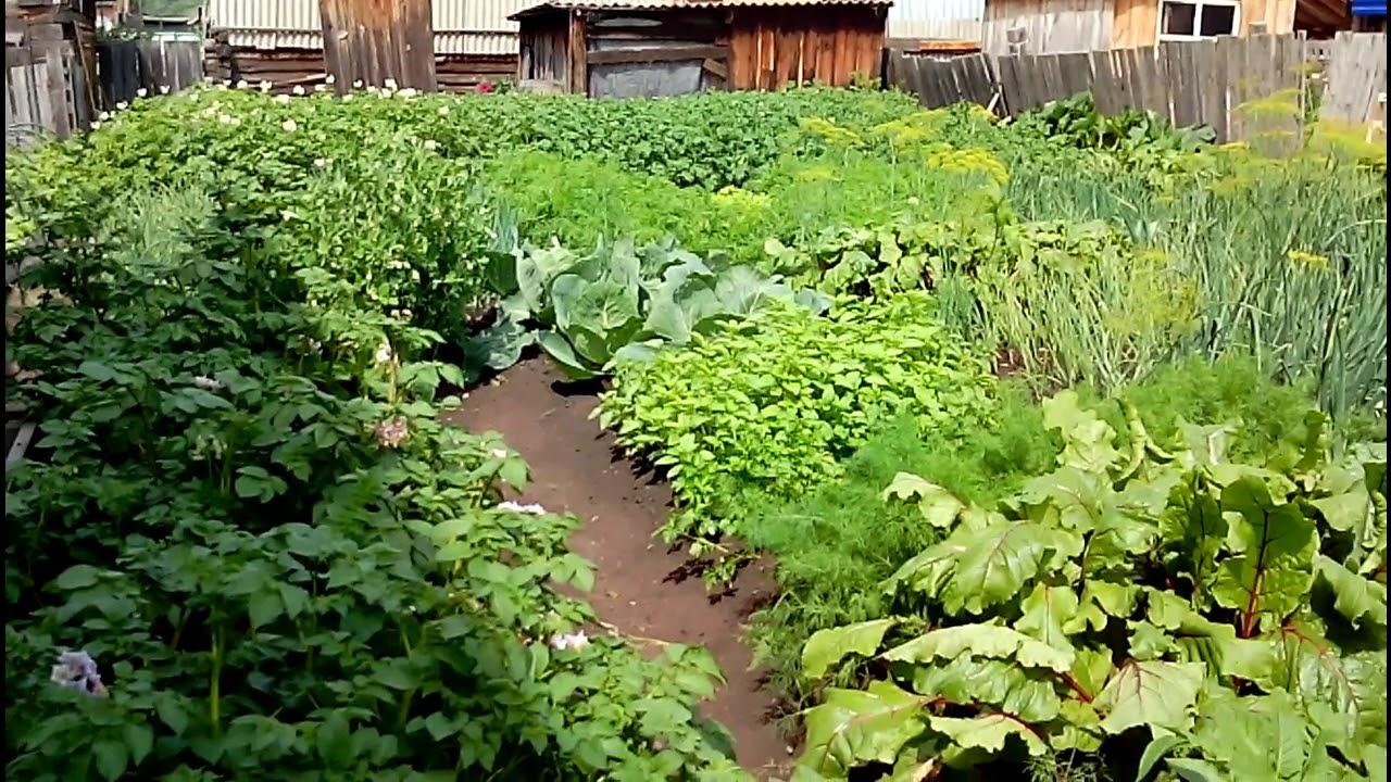 мини-огород  или как прокормить семью с двух соток