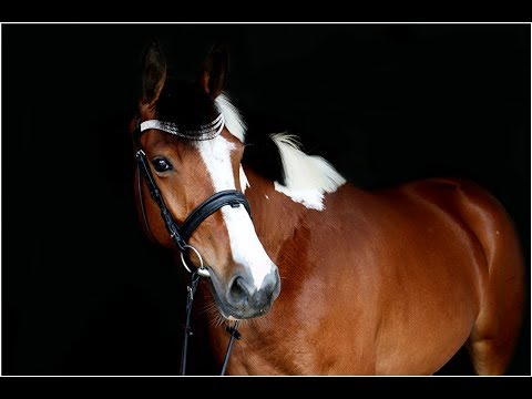 ---RESERVED--- Coconut Girl, 2011, Caleando x Mister Duc xx, her 1st free jumping 05 17