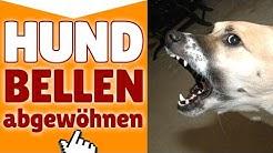 Hund Bellen abgewöhnen ✔ Wie du deinem Hund das Bellen abgewöhnen kannst ✔
