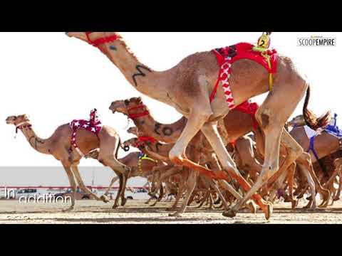 #AScoopof: Check out Al Marmoom Heritage Festival in Dubai