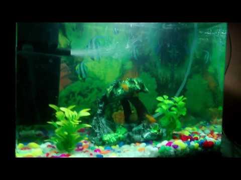 Moli fish aquarium