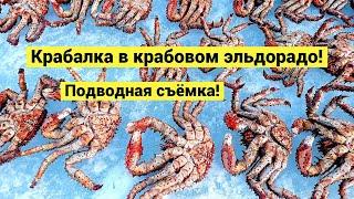 Крабалка в крабовом эльдорадо! Подводная съёмка / Okhotsk Sea Ice Crabbing!