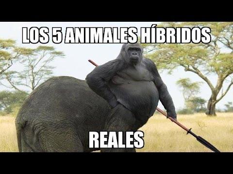 Animales Hibridos Reales