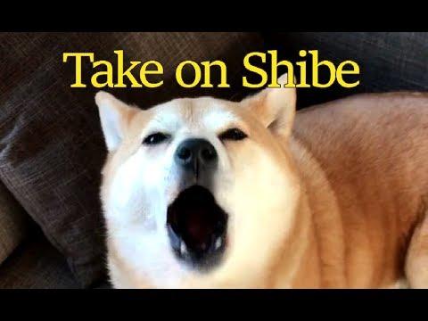 Take on Shibe