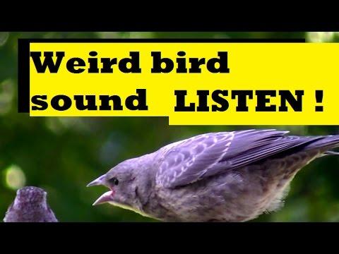 Weird Bird Sound - Nature Mystery Sounds