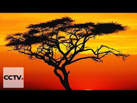 Les Chinois en Afrique Episode 2 Les Cadeaux de l'Orient
