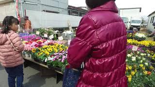 花泉互市(一関市花泉町)2019.4.2