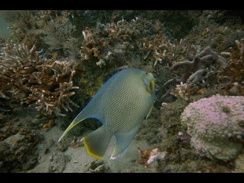 Coral Garden Offshore Jacksonville Florida