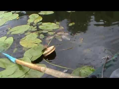 видео: Большая щука Тверская область.
