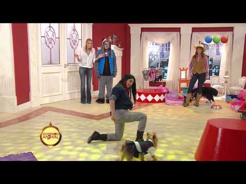 Dog Dancing: Chloe