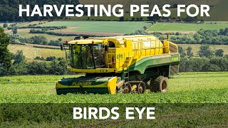 Pea Vining - The Green Pea Company
