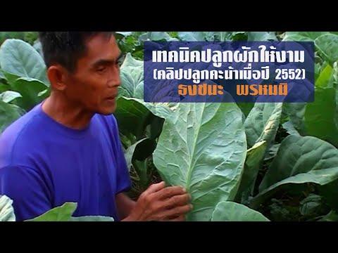 เทคนิคปลูกผักให้งาม-คลิปปลูกคะน้าเมื่อปี 2552 โดยธงชนะ พรหมมิ