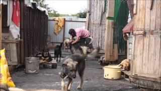 Приют для животных. Видео: Надежда БАЯНДИНА.