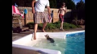 Yorkshire Terrier, Silly, Barking Yorkshire Terrier Jumps In The Pool With Little Boy, Chanel Bridge