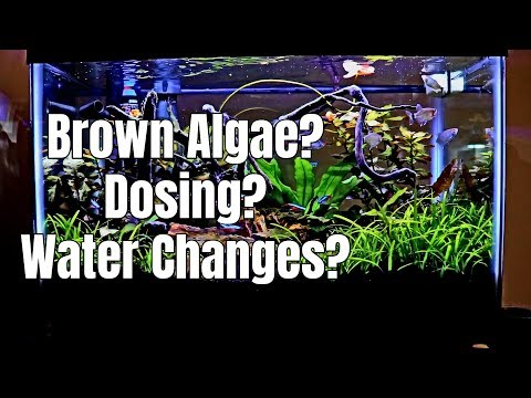 What I Do | Brown Algae, Dosing & Water Changes