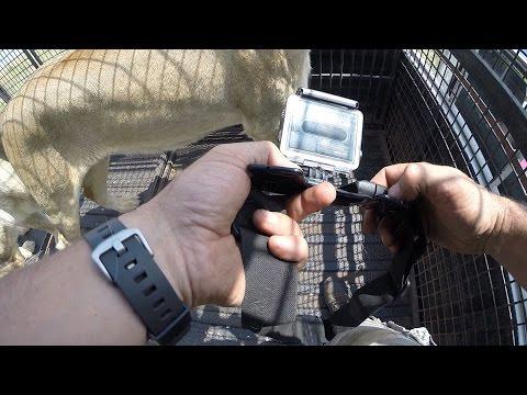GoPro: Lion Whisperer Tutorial