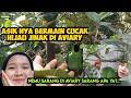 Lagi Asik Main Cucak Ijo Jinak Di Aviary Kita Malah Nemu Sarang Sarang Apa Ya  Mp3 - Mp4 Download