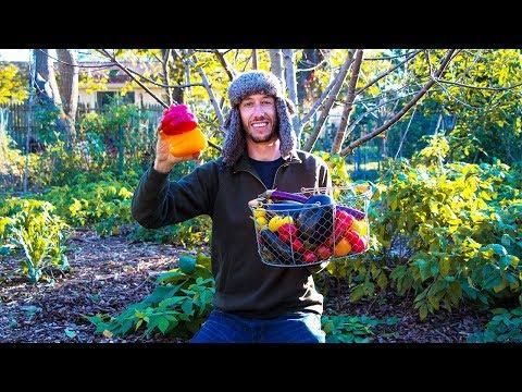 EPIC Fall Garden HARVEST, Beyond Organic Gardening