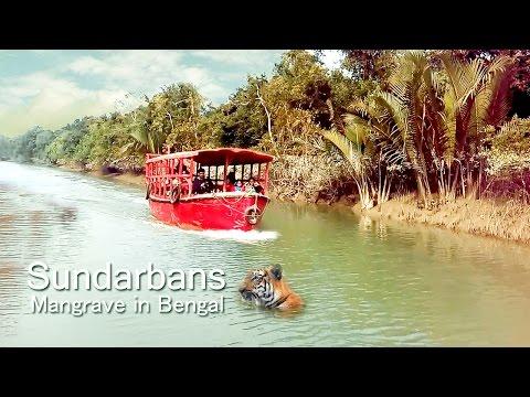 Sundarbans Mangrove In Bengal