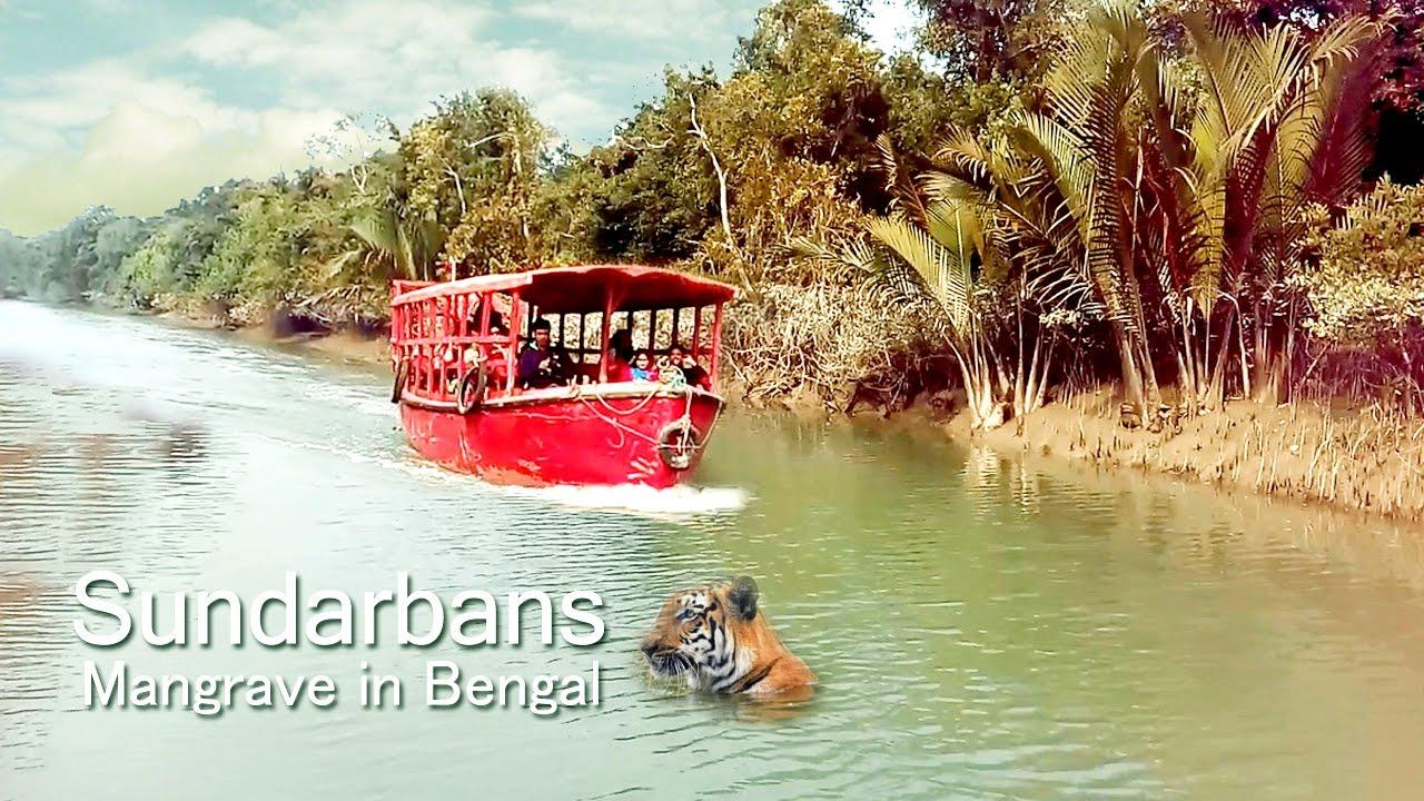 sundarban essay in bengali