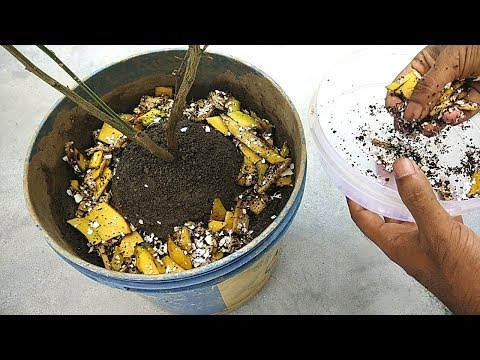 Use organic fertilizer in this way | Free natural fertilizer for any plants