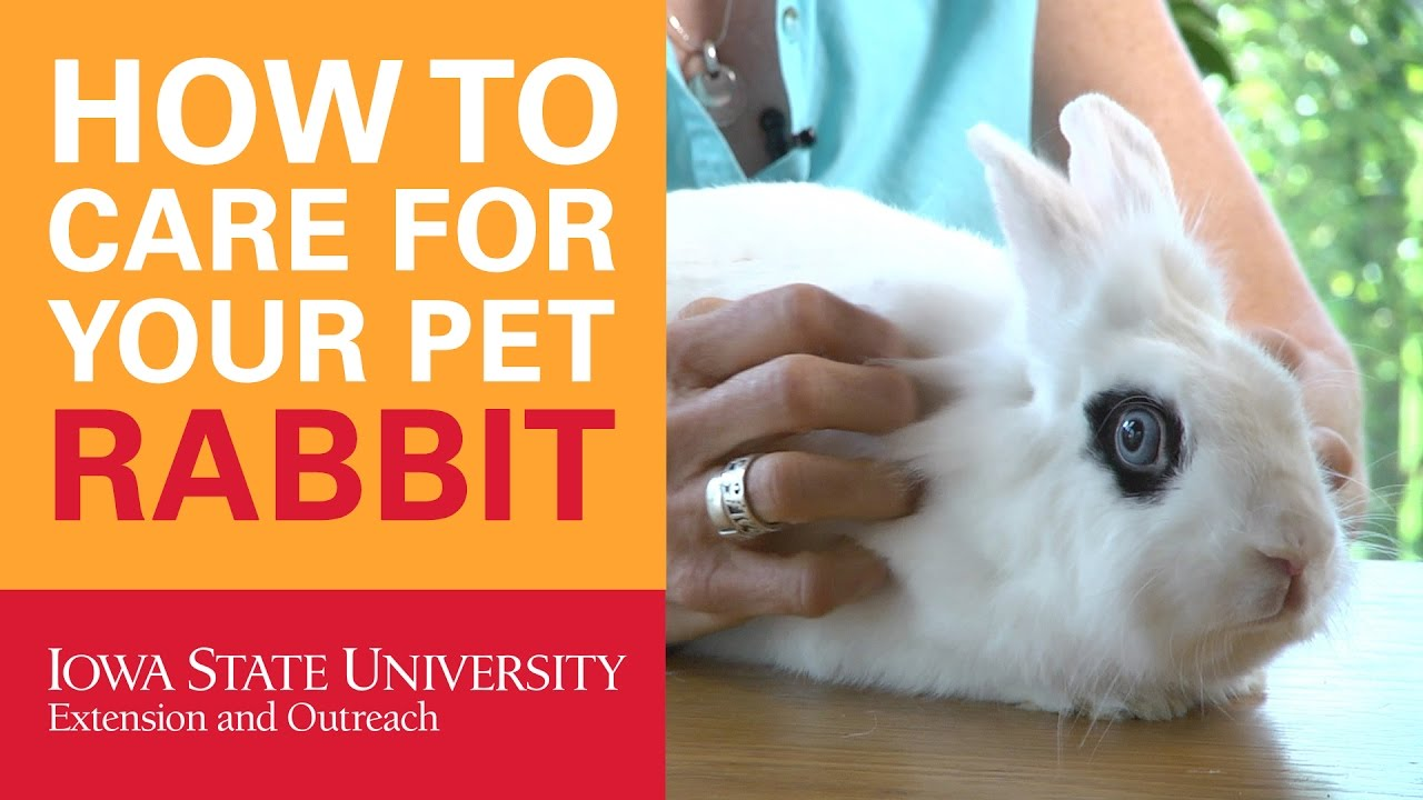 how to care for bunnies as pets