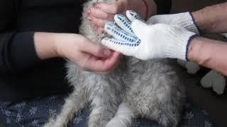 БГВ 59 Чёрная Львинка . Лечение кошки (3)