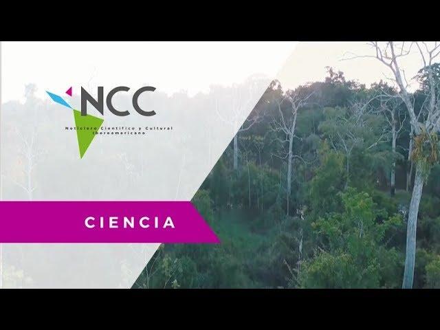 El Medio ambiente, un reto para Latinoamérica