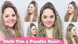 Penteados Estilo Pets: Shih Tzu E Poodle Hair ● Lói Cúrcio