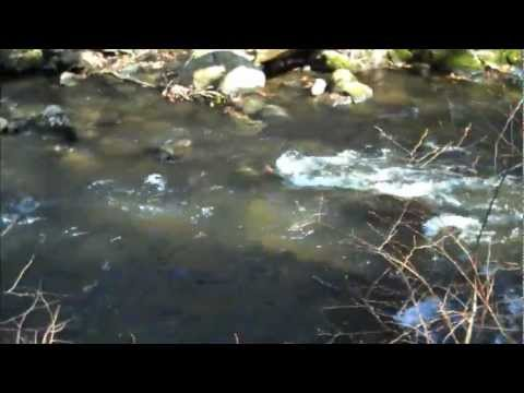 Fly Fishing the Mianus River, Stamford C.T.