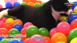 Selamat Ulang Tahun kucing lucu