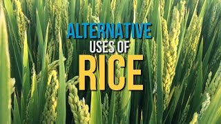 Alternative Uses of Rice