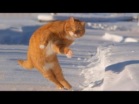 Funny cats Compilation New 2018