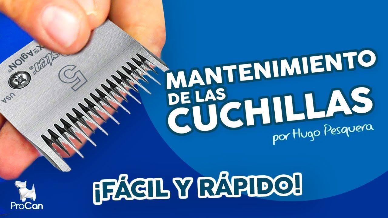 MANTENIMIENTO DE LA CUCHILLAS DE PELUQUERIA CANINA - YouTube 170509a6ffd1