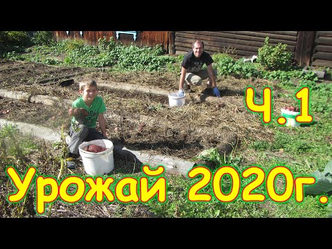 Сбор урожая 2020г. (Ч.1) Обзор огорода и собранного урожая. (10.20г.) Семья Бровченко.